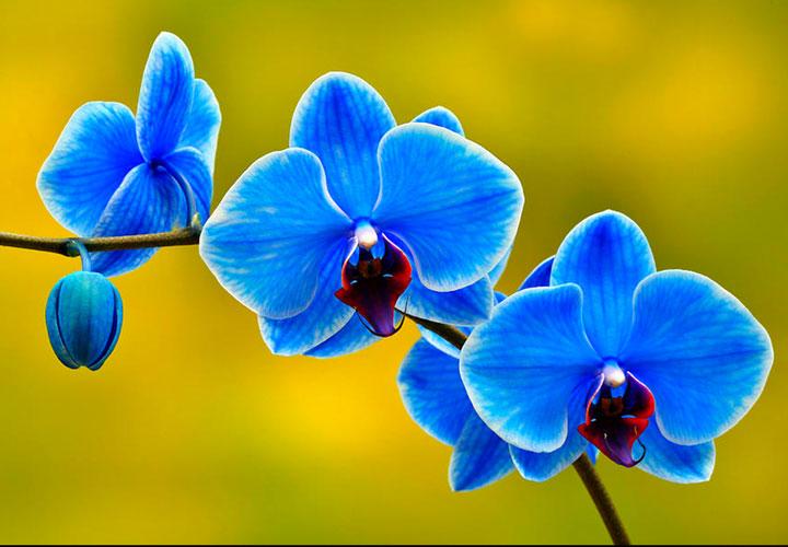 hoa-xanh