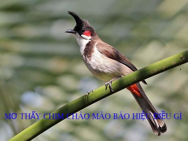 Mơ thấy chim chào mào là điềm báo gì?