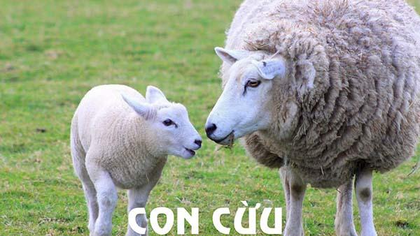 Nằm mơ thấy con cừu đem lại điềm báo gì