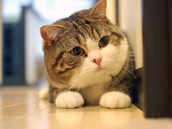 Giấc mơ thấy con vật: mơ thấy mèo