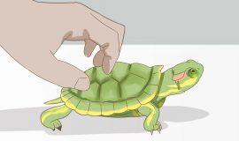 Rùa bò vào nhà là điềm báo gì đánh số gì thì trúng lớn